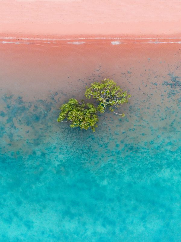 Roebuck Bay Mangroves, Broome